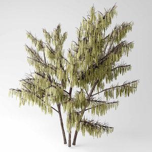 hazel tree 3D model