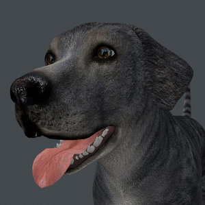 3D anml dog model