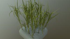 3D model sugar cane