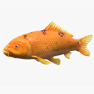 3D golden koi carp
