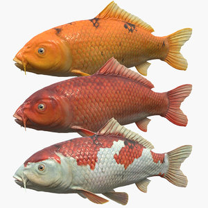 koi carps pack model