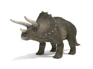 triceratops blender v-multi 3D model