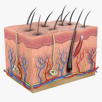 3D modeled skin