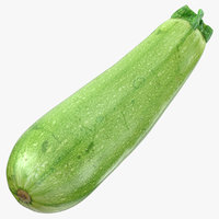 zucchini cousa squash 04 model