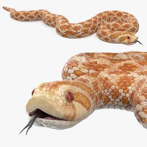 3D model coiled hognose snake animal
