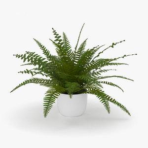fern plant nature 3D model