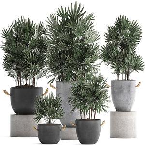 plants exotic palms tree 3D model
