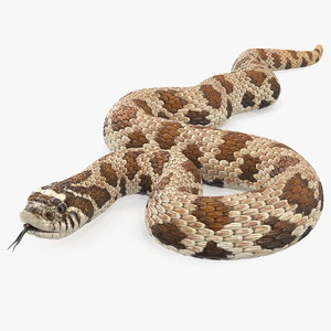 3D brown hognose snake coiled model