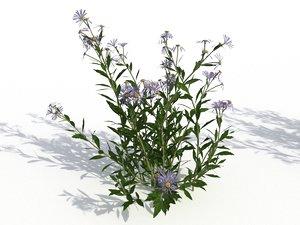 flower nature plant model
