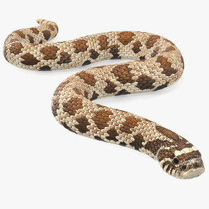 crawling brown hognose snake 3D