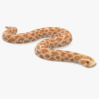 3D hognose snake crawling