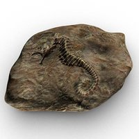 fossilized sea horse 3D model