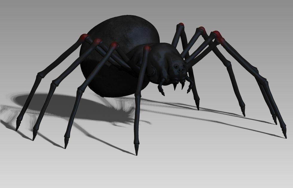 black spider 3D model