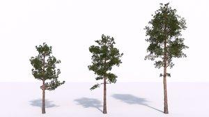 pine forests bark model