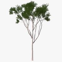eucalyptus tree 3D model