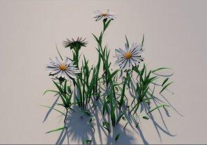 3D flower white aster