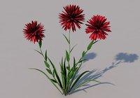 Pisacan Flower 3d Model