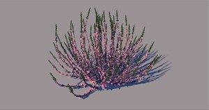 calluna flower 3D model
