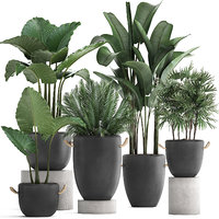3D plants exotic palm potted model
