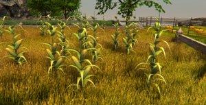 3D model plant corn