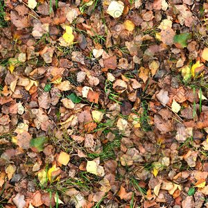 Grass with autumn leaves 09