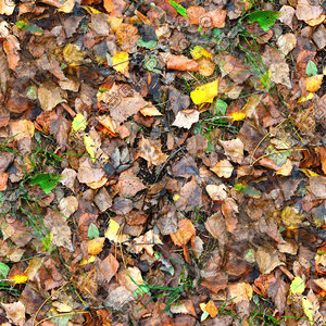 Grass with autumn leaves 10