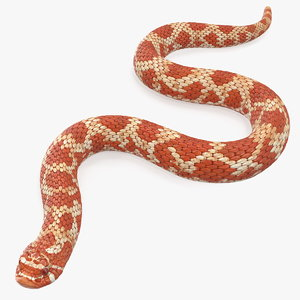 3D red hognose snake crawling model