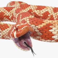 3D albino hognose snake rigged model