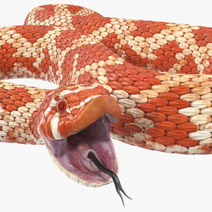 3D albino hognose snake rigged model