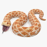beige hognose snake attack 3D model