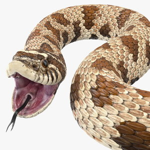 3D brown hognose snake rigged