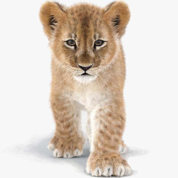 baby lion fur animation 3D model