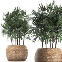 houseplants plants palm decorative 3D model
