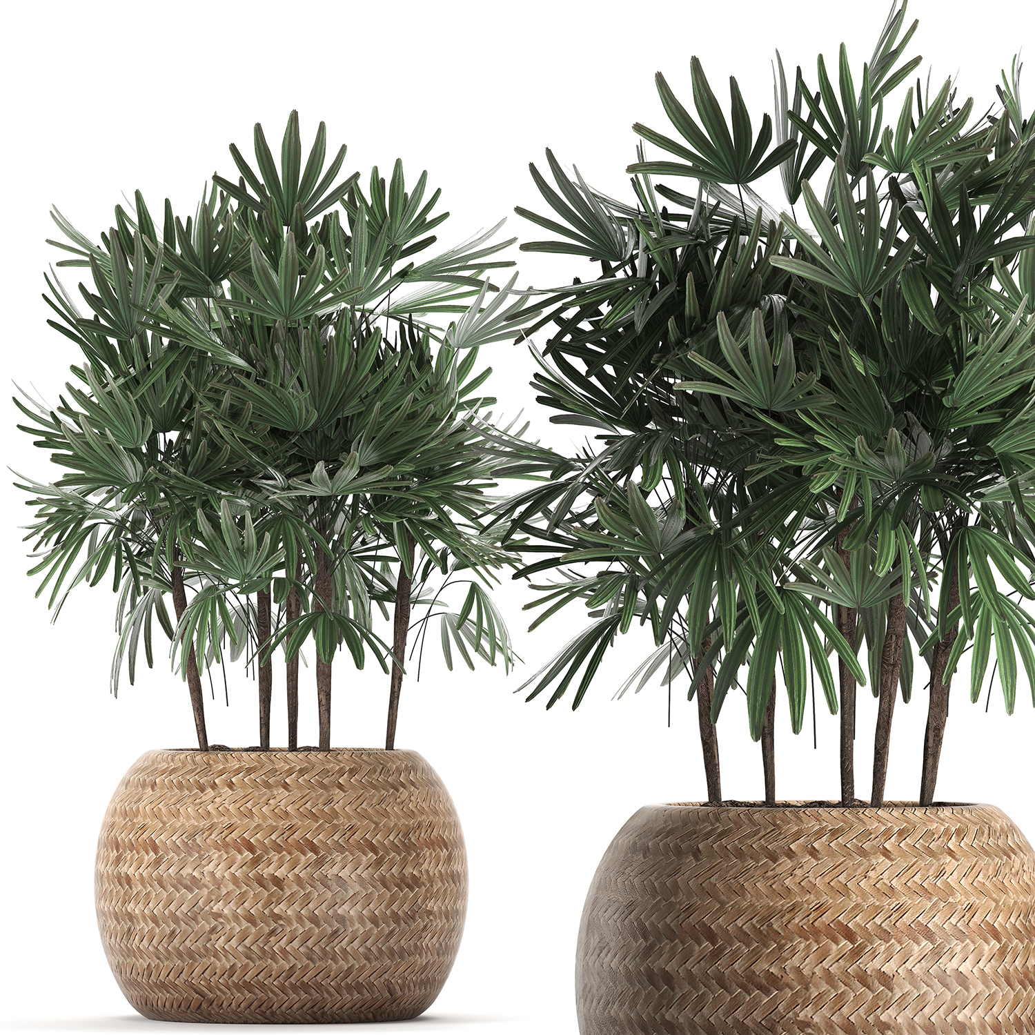 Decorative palm tree in a pot 416 on house plant schefflera arboricola, house plant palm care, bamboo tree, house plant flower, house plant orchid, house plant swedish ivy, yucca house plant tree, house plant arrow, house plant rubber plant, house plant grass, house plants that look like trees, low maintenance indoor plants tree, house plant pineapple, house plant house, house plant with green leaves and white, corn house plant tree, house plant umbrella tree, house plant bamboo, house plant propagation, house plant pink,