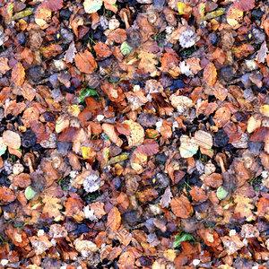 Leafy ground 09