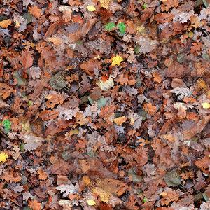 Leafy ground 03