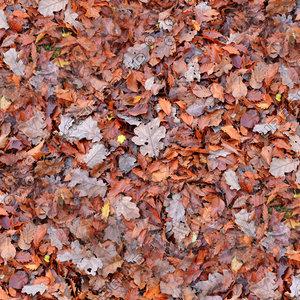 Leafy ground 01