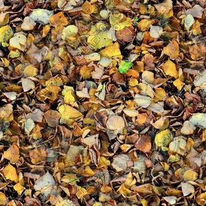 Leafy ground 16