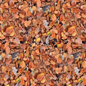 Leafy ground 10