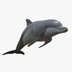 3D beautiful common bottlenose dolphin model