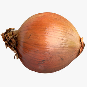 scanned onion 3D model