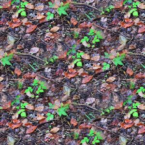 Leafy ground 23