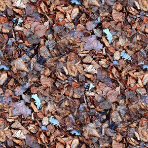 Leafy ground 33