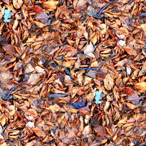 Leafy ground 19