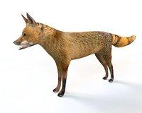 fox rigged 3D model