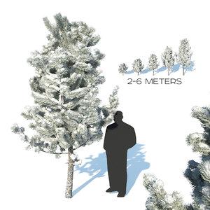 3D model pines snow tree
