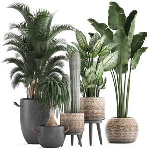 3D plants exotic palm tree
