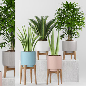 3D plants 263 indoor