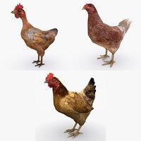 chickens 3D model
