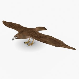 3D hawk type 01
